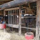 「やせた犬、ノイローゼの馬......」震災1カ月 原発5km圏内で見た被災動物の悲劇