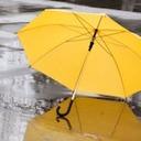 「軽トラ一台分も」台風の後、路上に捨てられビニ傘は誰が片付ける