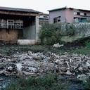 """殺された街、牛、心…福島警戒区域内で積み上がり続ける""""屍"""""""