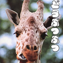 「中国の動物園は雑すぎる!」日本だからこそできた動物目線の写真集