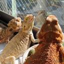 大蛇やトカゲに癒やされる!? お触り体験できる爬虫類カフェ『横浜亜熱帯茶館』