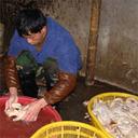 """「""""毒""""麻油鴨が幼稚園の給食に……」中国食品偽装の現場"""