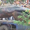 リアル・トレマーズ!! ベトナムの地底から謎の超巨大生物が掘り出された!!