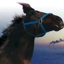 """""""食べることと、ただ殺すことはまるで違う!""""レース未勝利馬の数奇な運命を追う『祭の馬』"""