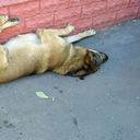 テロに加え、街中には野犬の群れも……ソチ五輪はマスコミも命がけ!