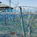 """東日本大震災から3年半──福島県の農園を苦しめる""""復興詐欺""""横行の現実"""