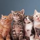 謎のネコ集団失踪事件、突然消えた221匹!彼らはいずこへ…?