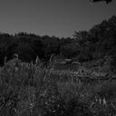 人のにおいが消えた集落、荒廃したDASH村、にぎわう歓楽街……写真家が語る、百人百様「福島」の風景