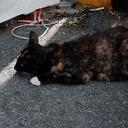 「生きたまま熱湯へ……」600匹以上の野良猫を屠殺・加工した韓国サイコ犯に、国民の怒り心頭!