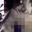 【衝撃動画】ロバが人間をレイプ!? 荒々しすぎる「逆獣姦」の決定的瞬間!!