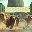 殺処分寸前の犬たちが人間に復讐する!! ハンガリー映画に込められた社会的弱者たちの叫び