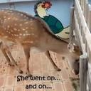 """奇行を繰り返す鹿に、命を落とす動物も……韓国""""デパート動物園""""で不祥事続々"""