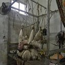 【閲覧注意】これは介護か虐待か? 47年間ロープに吊るされている男
