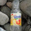 日本海沿岸にも漂着 金正恩第1書記のお気に入り「桃の香り炭酸甘水」って?