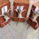 KFCへの抗議活動にネズミの虐待、呪術攻撃まで……南シナ海問題めぐり、中国人が狂気化