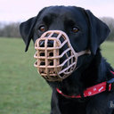 ペットの猛犬が子猫を襲うシーンを生配信! 韓国・生主に問われるモラルと、相次ぐ動物虐待