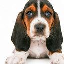 """高まる飼い主の需要と、「法律上、ペットは""""モノ」""""の壁……ペット医療の課題とは"""