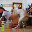 中国のエロ配信が過激化!?  セーラー服女が「獣姦動画」をライブ放送
