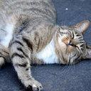 """""""魚5,000匹氷漬けリンク""""に怒り爆発の韓国で、猫の連続惨殺事件「首と片足を木に縛られ……」"""