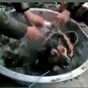 【閲覧注意】生きたまま熱湯に放り込まれ、下半身の皮を剥がされた犬 最後の力を振り絞って逃亡も……