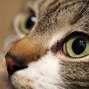 檻に閉じ込めた猫に熱湯をバシャーッ! 鬼畜すぎる動物虐待犯に50万円の懸賞金