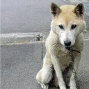 """韓国人の深刻な""""犬食離れ""""に、専門店からため息……国内外からの批判集中が原因か?"""