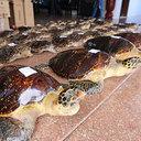 """絶滅危惧種のウミガメ38匹を""""まるゆで"""" 残酷すぎる中国「希少動物密売」の実態"""