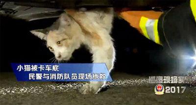 悲しげに便器から見上げる子犬が……中国の「抜け出せなくなった」犬猫たちの画像3