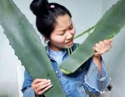 実は有毒植物だった! アロエの大食いチャレンジを生配信していた女性が中毒死寸前にの画像1