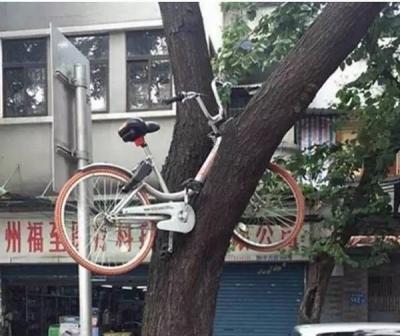 部品窃盗から詐欺まで……爆発的な人気獲得も、中国人の低モラルに泣かされる「自転車シェアリング」の画像2