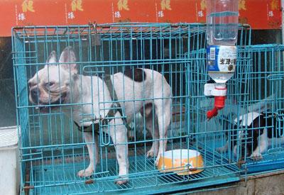 china_dog.jpg
