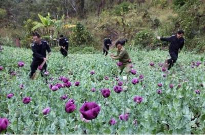 スマホ決済でドラッグ売買も 日本にも影響!? 中国麻薬「製造・流入」最新事情の画像2