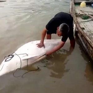 中国漁民が国家保護動物のシロイルカを解体販売! 「パンダ捕殺と同等」の蛮行に、死刑の可能性も……の画像1