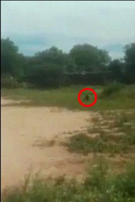 【動画アリ】ゴブリンか!? 草むらをうごめくUMAに、サッカー少年が発狂寸前!の画像1