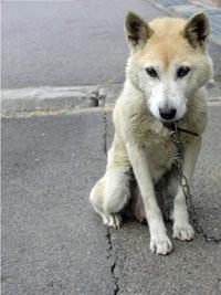 韓国人の深刻な犬食離れに、専門店からため息……国内外からの批判集中が原因か?の画像1