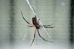 世界で続出する害虫の人体侵入! インド人女性の耳から生きたクモが摘出されるの画像1