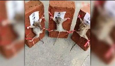 mouse072502.jpg