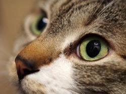 檻に閉じ込めた猫に熱湯をバシャーッ! 残忍すぎる動物虐待犯に50万円の懸賞金の画像1