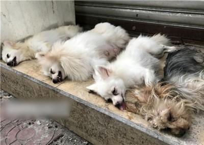 路上で犬の声帯除去手術を行う闇業者が出現「縄で口をこじ開け、はさみでチョキン!」の画像1