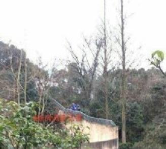 松島トモ子も仰天! トラ襲撃による死亡事故続発も、動物園の入場者は倍増?の画像3