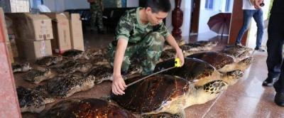 絶滅危惧種のウミガメ38匹をまるゆで 残酷すぎる中国「希少動物密売」の実態の画像1