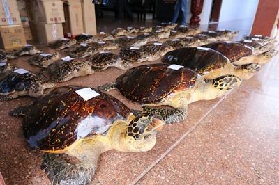 絶滅危惧種のウミガメ38匹をまるゆで 残酷すぎる中国「希少動物密売」の実態の画像2