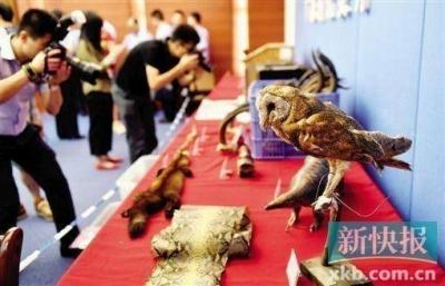 絶滅危惧種のウミガメ38匹をまるゆで 残酷すぎる中国「希少動物密売」の実態の画像3